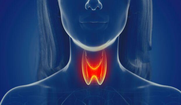 3-D-Darstellung der schmetterlingsförmigen Schilddrüse