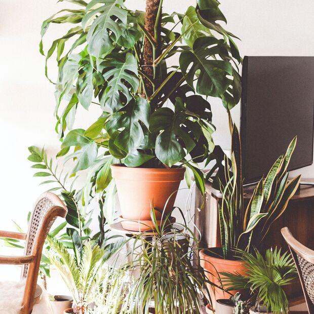 Bei Zimmerpflanzen gilt das Motto: Mehr ist mehr