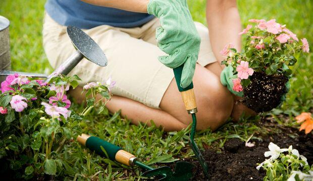 Beim Gärtnern sollte man stets Gartenhandschuhe tragen.