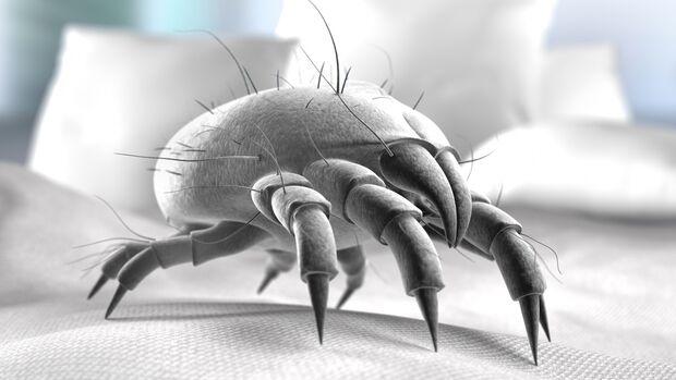 Bettmilben können Allergien auslösen