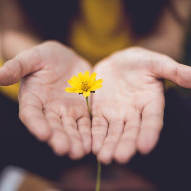 Blume schenken
