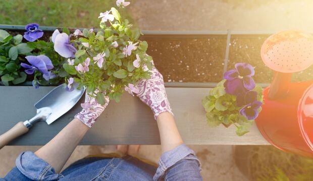 Gärtnern kann man selbst auf dem kleinsten Balkon