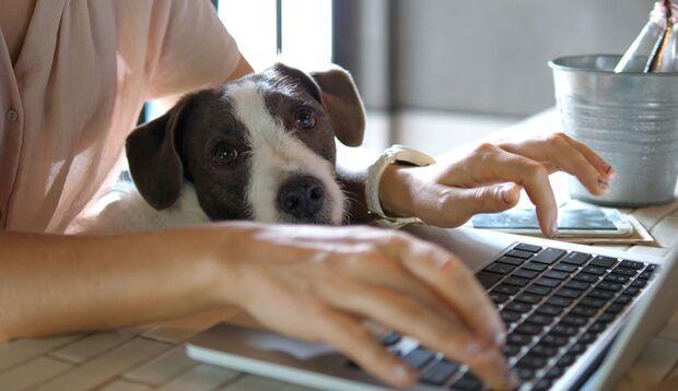 Im Home-Office zu arbeiten bedarf einer guten Konzentrationsfähigkeit