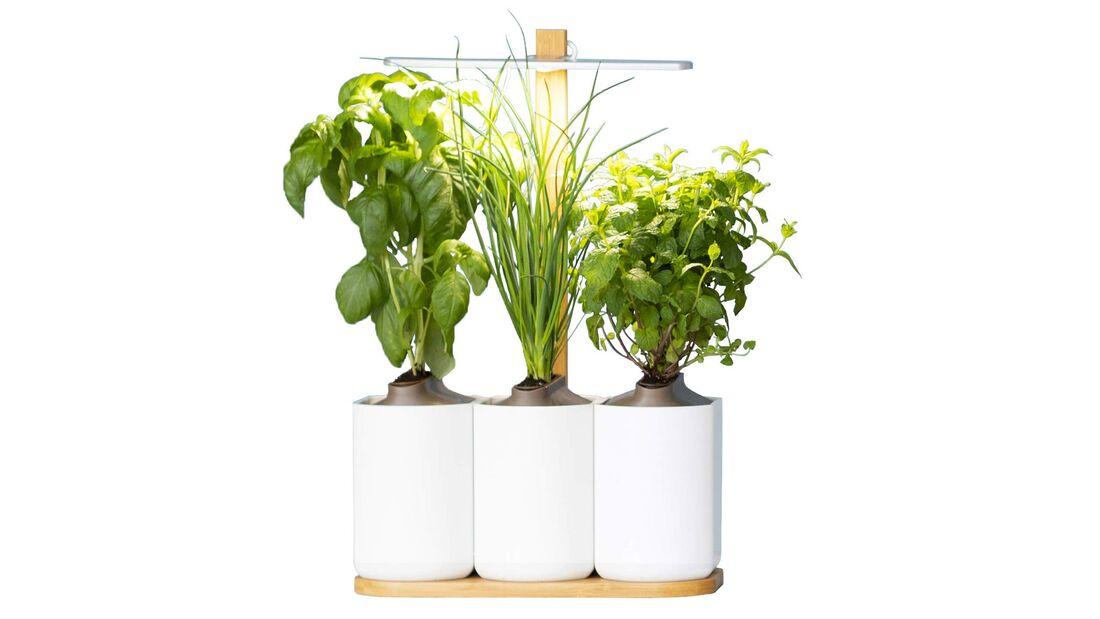 Indoor-Garten für die Küche