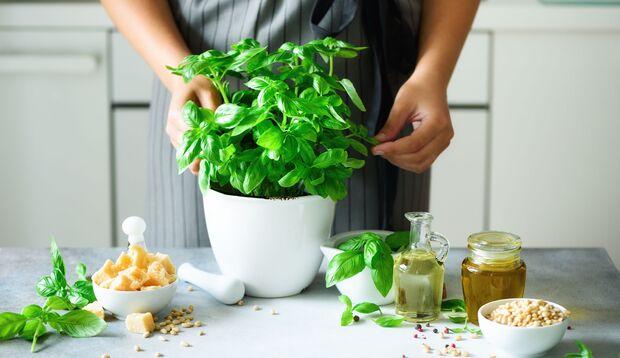 Kräuter schmecken intensiv aromatisch