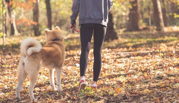 Mit Ihrem Hund können Sie überall Sport machen.