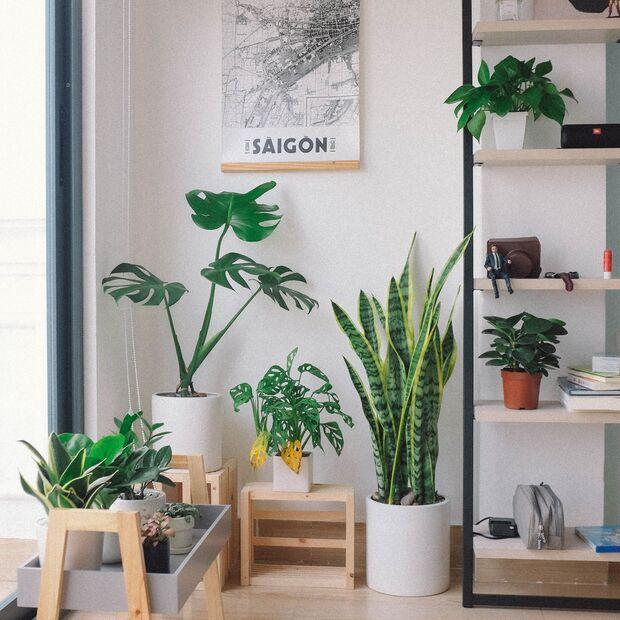 Pflanzen können noch viel mehr, als bloß unser Lieblingszimmer aufhübschen