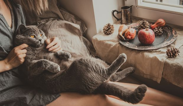 Richtig super ist natürlich Körperwärme von jemand anders, auch von einer kuscheligen Katze.