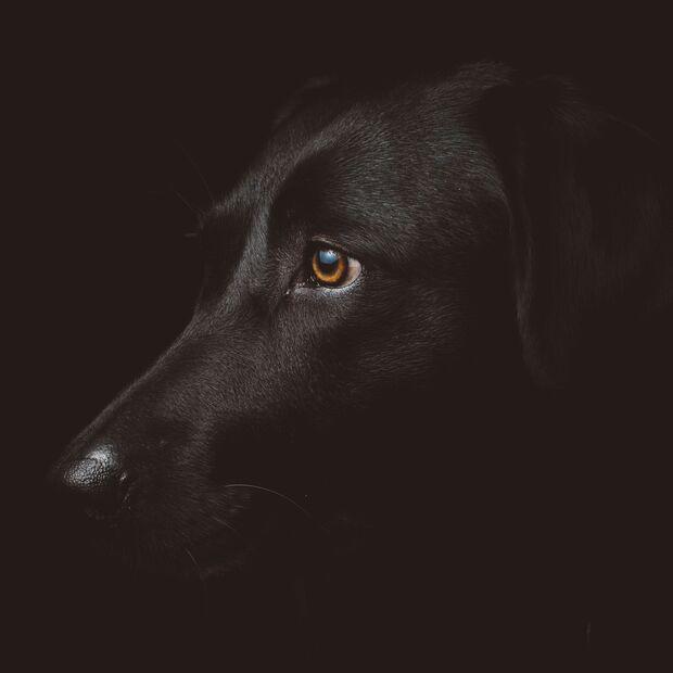 Schwarz symbolisiert Individualität und Eigenständigkeit