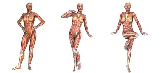 Sportmediziner unterscheiden dabei zwei verschiedene Muskelfasertypen: Slow- und Fast-Twitch-Fasern