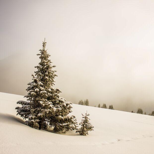 Weihnachtsbaum, Schnee, Weihnachten