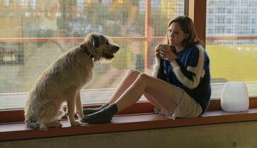 Hund frau und Single Frauen